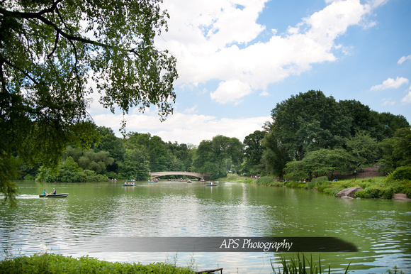 New York City's Central Park 2